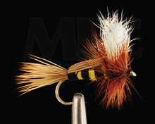 Rydeberg's Humpbee- MFC