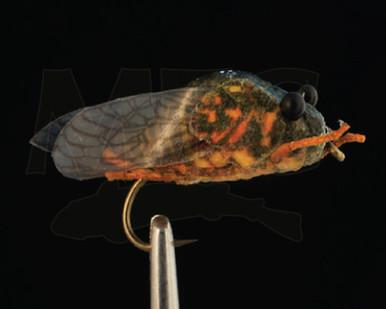 True Cicada- MFC