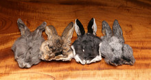 Hareline Natural Bunny Masks