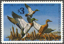 Minnesota Duck Stamp 1977 Mallards