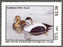 Maine Duck Stamp 2000 Common Eider