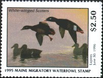 Maine Duck Stamp 1995 White - Winged Scoter / Decoy