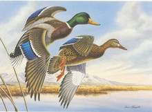 Utah Duck Stamp Print 1988 Mallards by Dave Chapple
