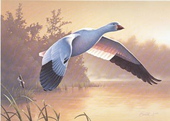 US Federal Duck Stamp Print RW55 (1988-1989)