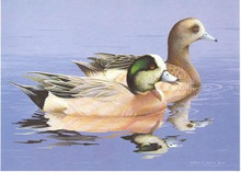 US Federal Duck Stamp Print RW51 (1984-1985)