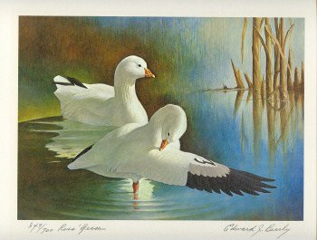US Federal Duck Stamp Print RW37 (1970-1971)