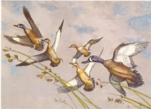 US Federal Duck Stamp Print RW20 (1953- 1954)