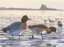 UK Duck Stamp Print 1993 European Wigeon by Chris Rose
