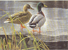 Canada Duck Stamp Print 1985 Mallards by Robert Bateman Medallion Edition