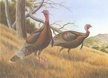 National Wild Turkey Foundation Stamp Print 1985 California Chapter Wild Turkeys by Dave Chapple AP