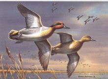 National Fish and Wildlife Stamp Print 1995 Green-Winged Teal by James Hautman