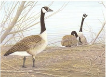 Wyoming Stamp Print 1985 Canada Geese by Robert Kusserow