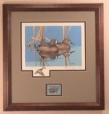 Wisconsin Duck Stamp Print 1983 Blue-winged Teal by Rockne Knuth Framed
