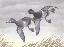 Wisconsin Duck Stamp Print 1981 Lesser Scaup by Timothy C. Schultz