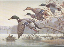 West Virginia Duck Stamp Print 1991 Mallards by Rob Leslie
