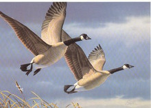 West Virginia Duck Stamp Print 1987 Canada Geese by Daniel Smith Medallion Edition