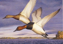 Vermont Duck Stamp Print 1999 Canvasbacks by George Lockwood Artist Proof