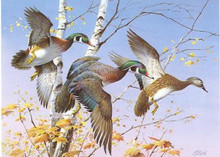 Vermont Duck Stamp Print 1986 Wood Ducks by Jim Killen
