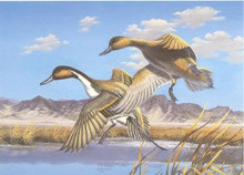 Utah Duck Stamp Print 1987 Pintails by Arthur S. Anderson Medallion Edition