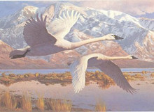 Utah Duck Stamp Print 1986 Whistling Swans by Leon Parson Silver Medallion Edition