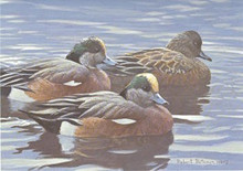 Texas Duck Stamp Print 1990 American Widgeon by Robert Bateman Medallion Edition