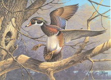 South Carolina Duck Stamp Print 1990 Wood Ducks by John Wilson Gov Ed