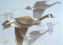 South Carolina Duck Stamp Print 1984 Canada Geese by Al Dornisch