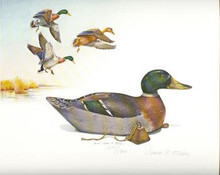 Pennsylvania Conservaton Duck Stamp Print 1982 Mallard Decoy by James P. Fisher Sportsman