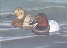 Pennsylvania Duck Stamp Print 1990 Canvasbacks By Thomas Hirta