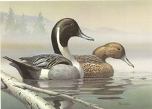 Pennsylvania Duck Stamp Print 1987 Pintails By Rob Leslie