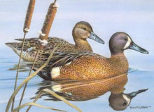 Pennsylvania Duck Stamp Print 1986 Blue-winged Teal by Robert C. Knutson Medallion Edition
