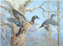 Pennsylvania Duck Stamp Print 1983 Wood Ducks by Ned Smith