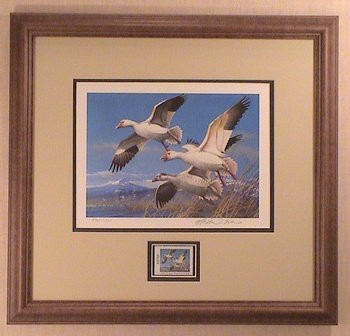 Oregon Duck Stamp Print 1985 Lesser Snow Geese by Michael Sieve Framed