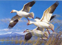 Oregon Duck Stamp Print 1985 Lesser Snow Geese by Michael Sieve
