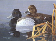 Ohio Duck Stamp Print 1991 Lesser Scaup by Gregory Clair