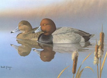 Ohio Duck Stamp Print 1985 Redheads by Ronald Louque