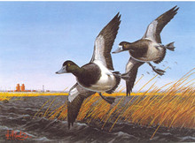 North Dakota Duck Stamp Print 1985 Greater Scaup by Leslie C. Kouba Artist Proof