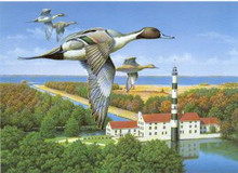North Carolina Duck Stamp Print 1996 Pintails / Lighthouse by Robert Leslie Artist Proof