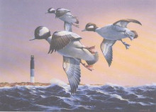 North Carolina Duck Stamp Print 1994 Buffleheads / Lighthouse by Phillip Crowe Artist Proof