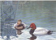 New York Duck Stamp Print 1990 Canvasbacks by John Seerey-Lester Medallion Edition
