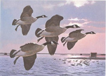 New York Duck Stamp Print 1985 Canada Geese by Larry Barton