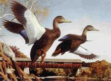New Hampshire Duck Stamp Print 1989 Black Ducks by Robert Steiner
