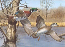 New Hampshire Duck Stamp Print 1983 Wood Ducks by Richard W. Plasschaert Color Remarque