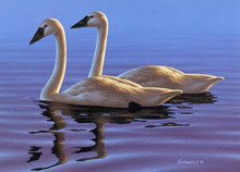 Nevada Duck Stamp Print 1981 Whistling Swans by Phil Scholer