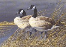 Nebraska Duck Stamp Print 1991 Canada Geese by Neal R. Anderson
