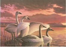 Montana Duck Stamp Print 1995 Tundra Swans by Wayne Dowdy Medalion Edition