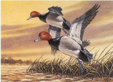 Montana Duck Stamp Print 1987 Redhead Ducks by Roger Cruwys Medallion Edition