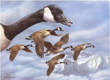 Montana Duck Stamp Print 1986 Canada Geese by Joe Thornbrugh