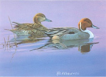 Missouri Duck Stamp Print 1987 pintails by Ron Ferkol Trimmed Print With Pencil Remarque and Stamp
