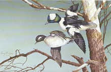Missouri Duck Stamp Print 1982 Buffleheads by Gary Lucy